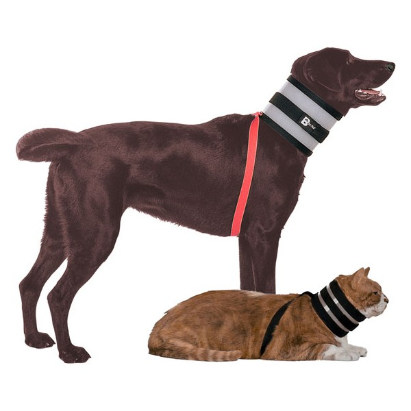 accessoire pour chien