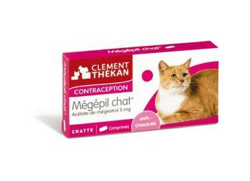 contraception pour chat