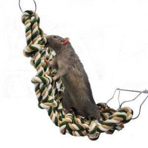 jouet pour rat
