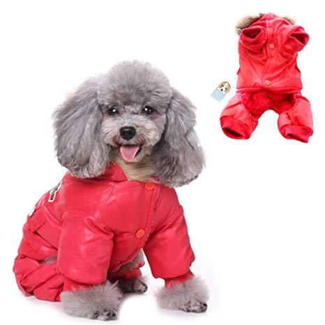 manteau pour chien