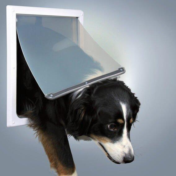 trappe chien