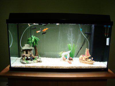 accessoire pour aquarium