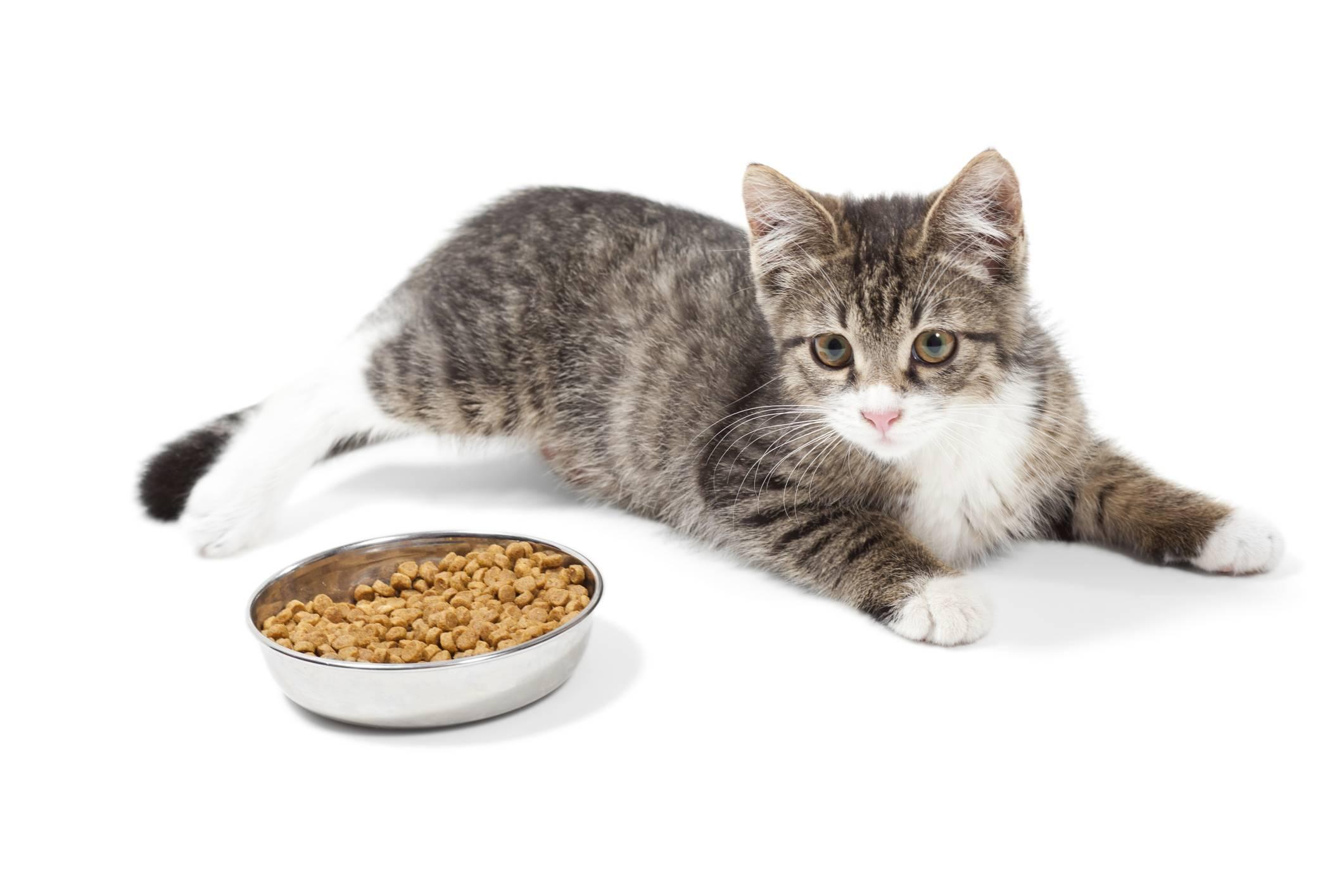 alimentation chaton