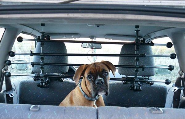 barriere voiture chien