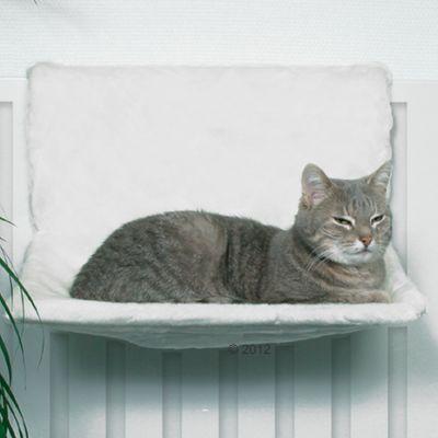 chat radiateur