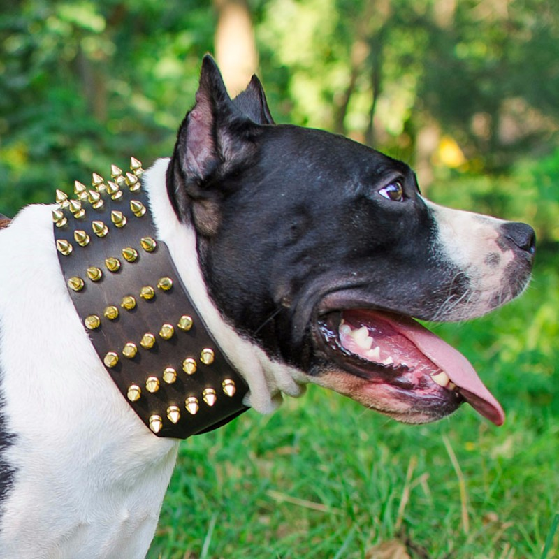 collier staffie