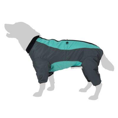 combinaison chien