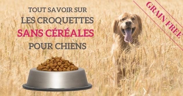 croquettes chien sans glucides