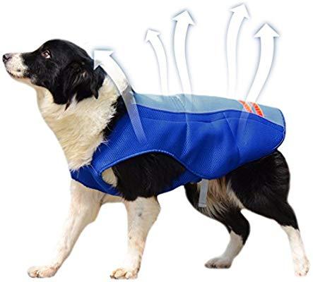 gilet rafraichissant chien