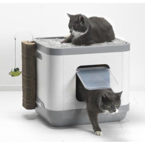 maison litière chat