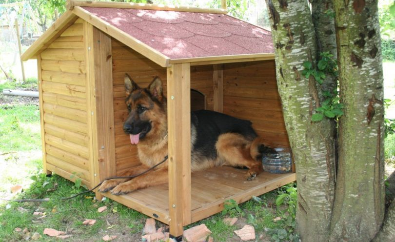 niche pour chien berger allemand