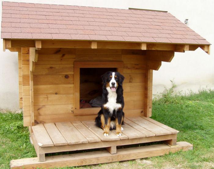 niche pour chien grande taille