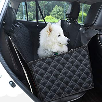 protection chien voiture