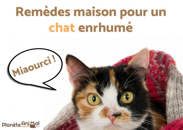 rhume des chats